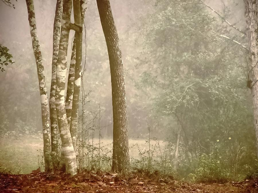 Fog Photograph - Forest In Fog by Robert Brown