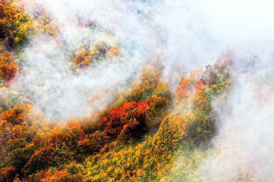 Balkan Mountains Photograph - Forest In Veil Of Mists by Evgeni Dinev