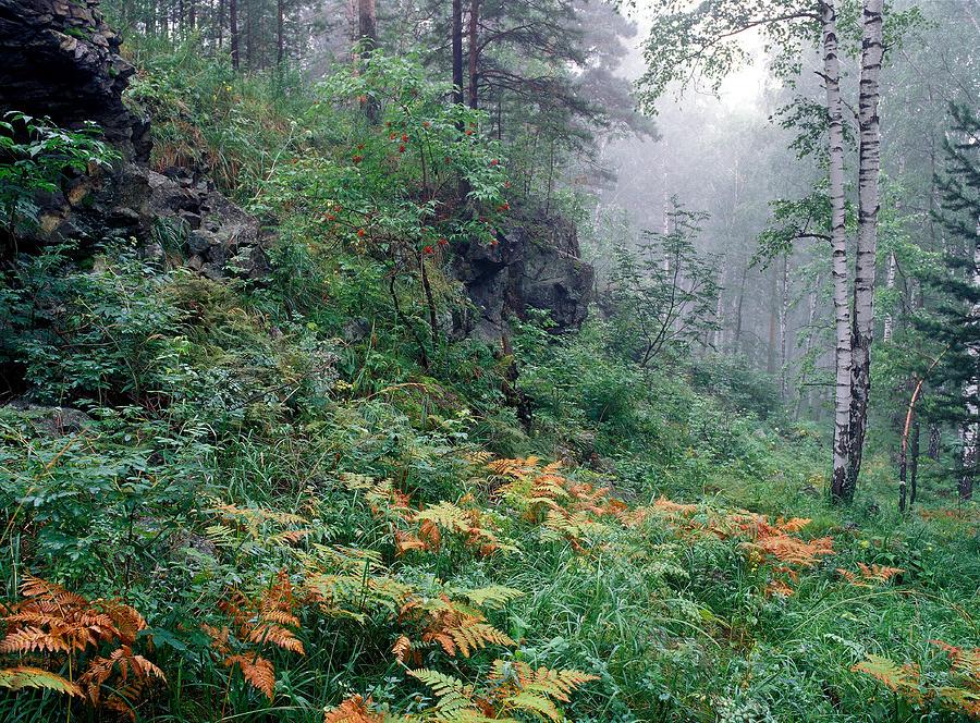 Forest Light-7 Photograph