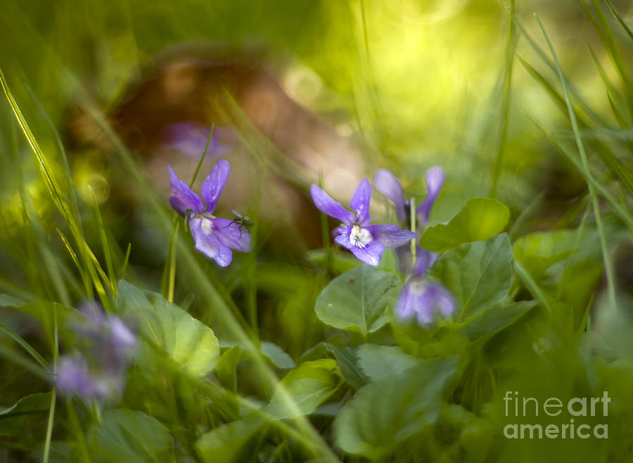 Flower Photograph - Forest Meadow by Angel  Tarantella