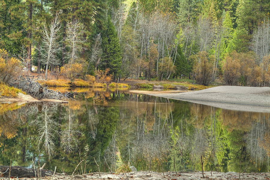 Yosemite Photograph - Forest Reflection-merced River by Ron Schwager