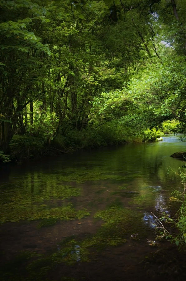Background Photograph - Forest River by Svetlana Sewell