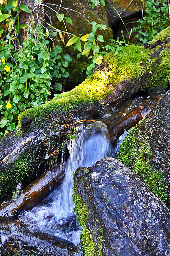 Falling Water Photograph - Forest Stream by Cheri Randolph