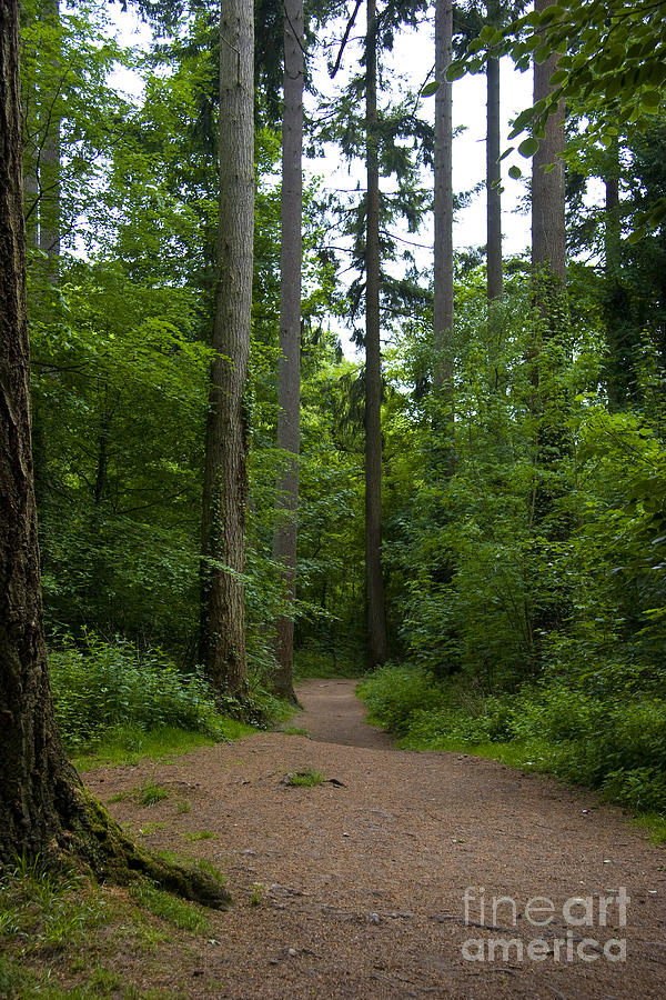 Forest Photograph - Forest Trail by Ron Telford