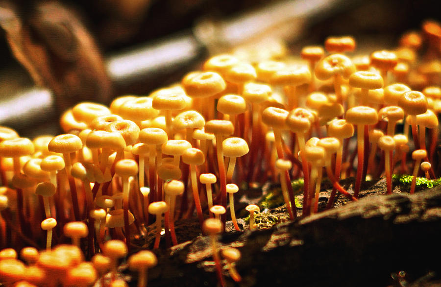 Tiny Photograph - Forest Trifles by Rebecca Sherman