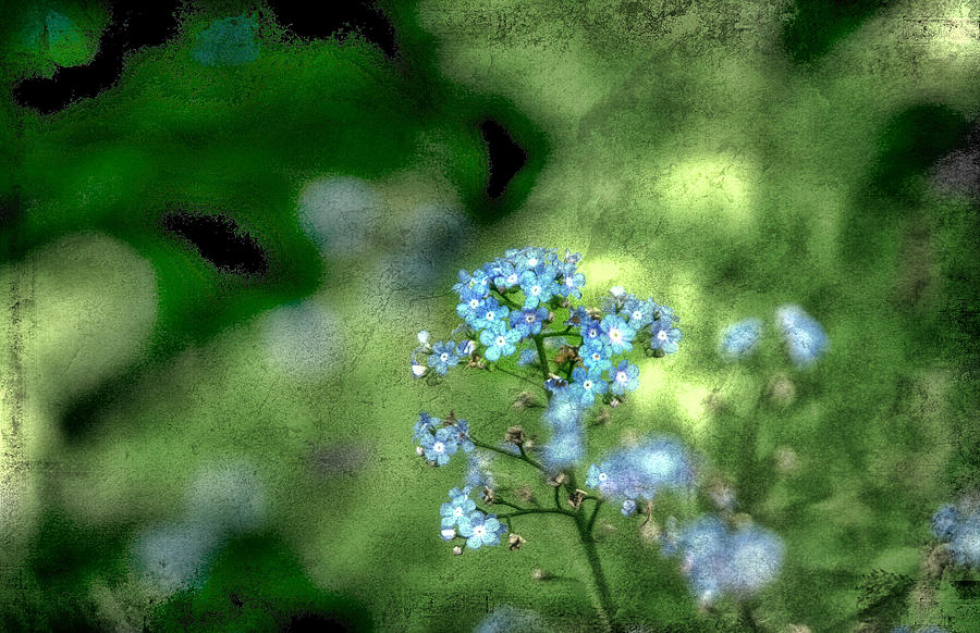 Forget-me-not Photograph - Forget-me-not Grunge by Darren Fisher