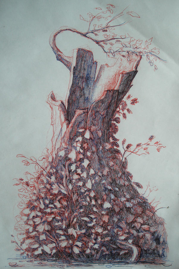 A Tree In Central Park Drawing - Forgiveness by Ralph Nixon Jr