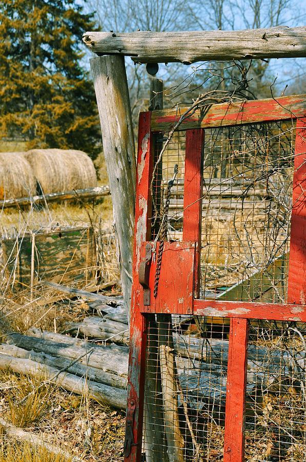 Forgotten Photograph - Forgotten Garden by JAMART Photography