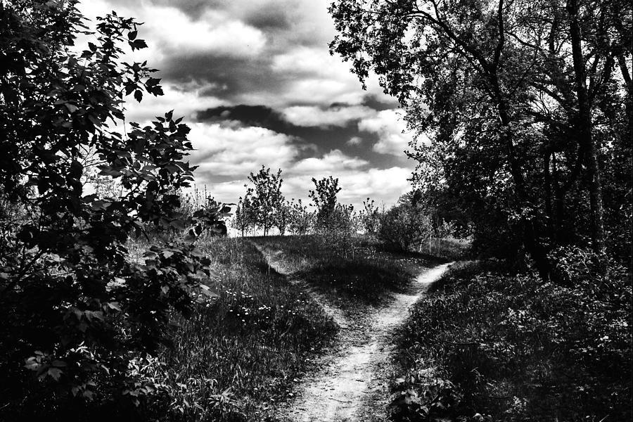 Winnipeg Photograph - Fork In The Path by Karen Dawson