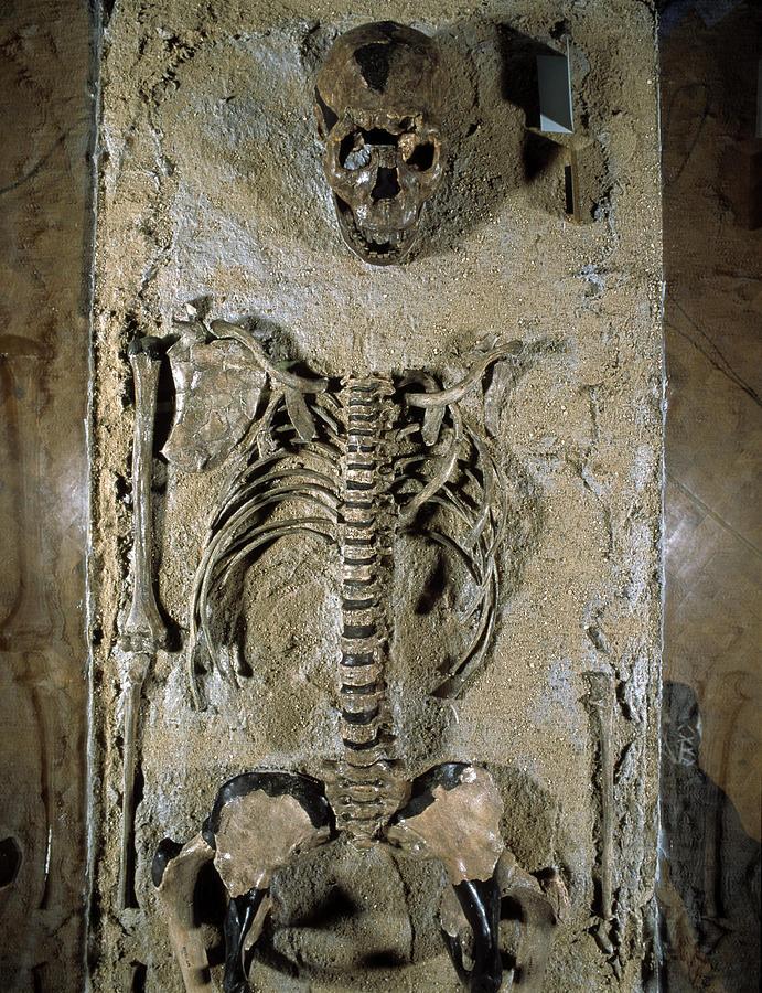 Skeleton Photograph - Fossilised Skeleton Of Homo Erectus Boy From Kenya by Volker Stegernordstar - 4 Million Years Of Man