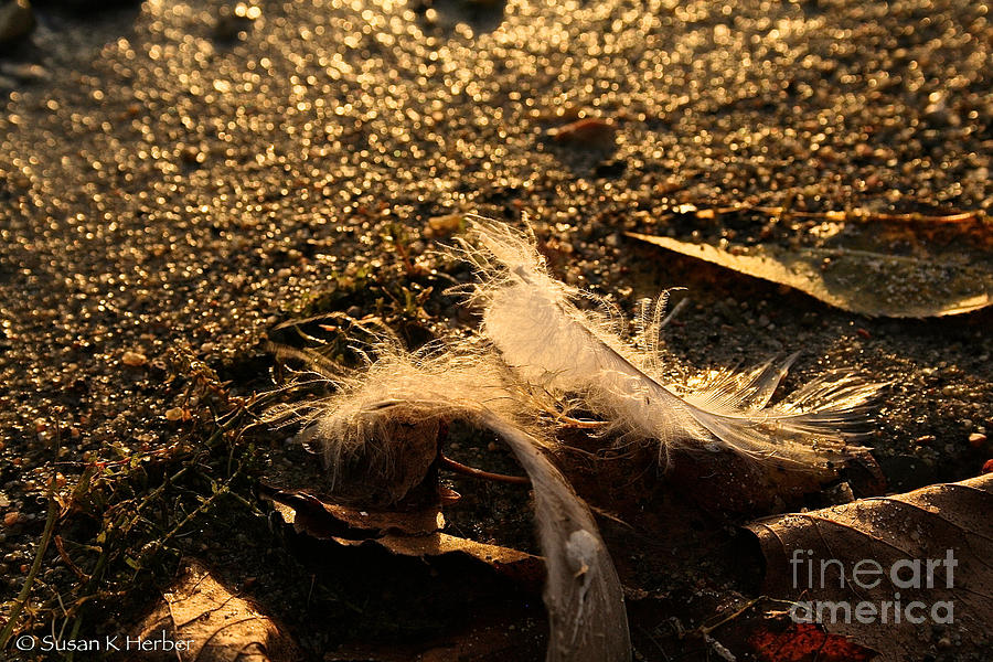 Shoreline Photograph - Found Feathers by Susan Herber