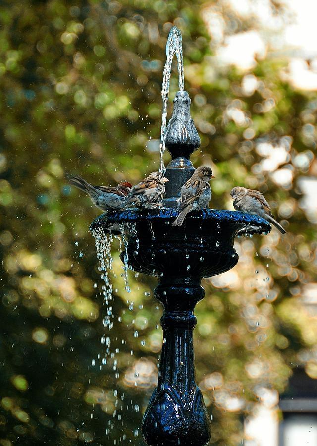 Van Photograph - Fountain Bathing by JAMART Photography