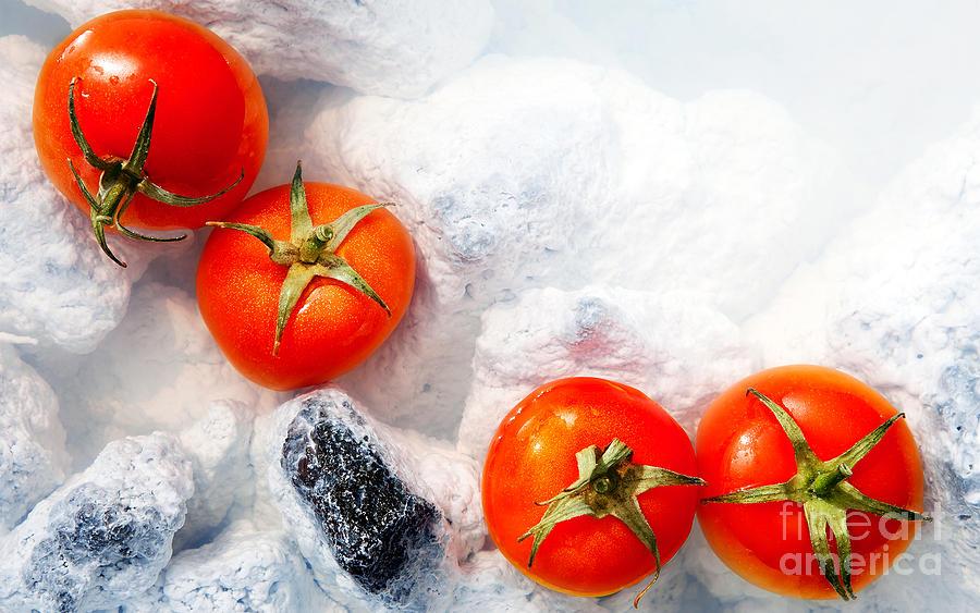 Tomatoes Photograph - Four Red Tomatos  by Agusta Gudrun Olafsdottir