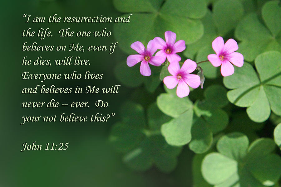 Four tiny pink flowers john 11v25 photograph by linda phelps scripture photograph four tiny pink flowers john 11v25 by linda phelps mightylinksfo
