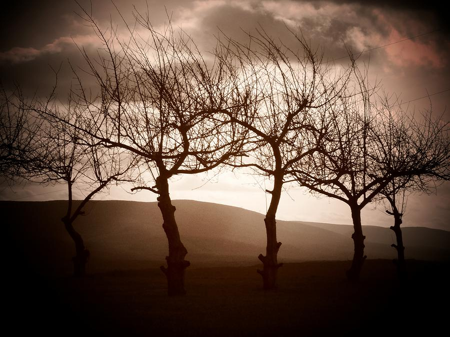 Trees Photograph - Four Trees by Michael L Kimble