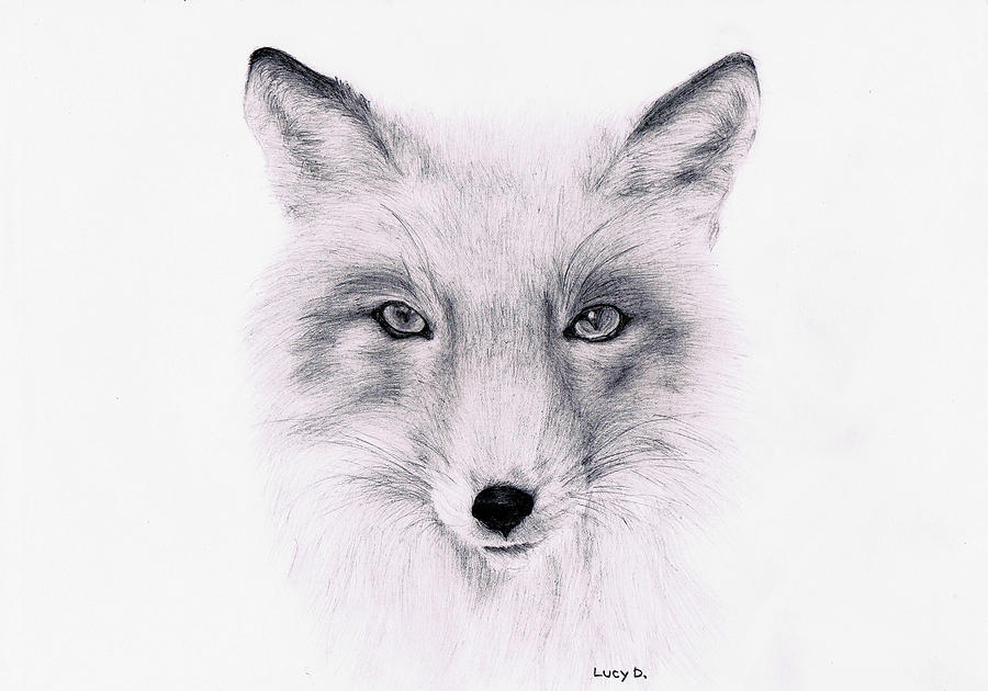 Fox Drawing - Fox by Lucy D