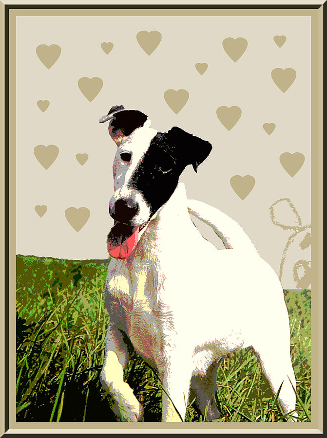 Fox Terrier Smooth Photograph - Fox Terrier Smooth by One Rude Dawg Orcutt