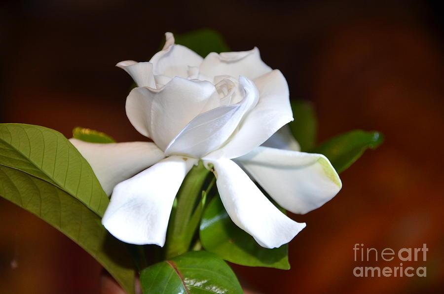 Flower Photograph - Fragrant Flower by Jiss Joseph