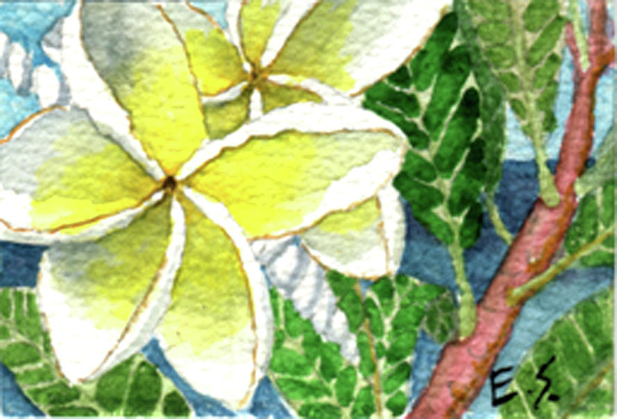 Fragrant Plumeria by Eric Samuelson