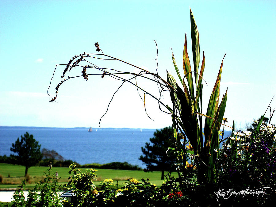 Landscape Photograph - Framing The Bay by Ruth Bodycott