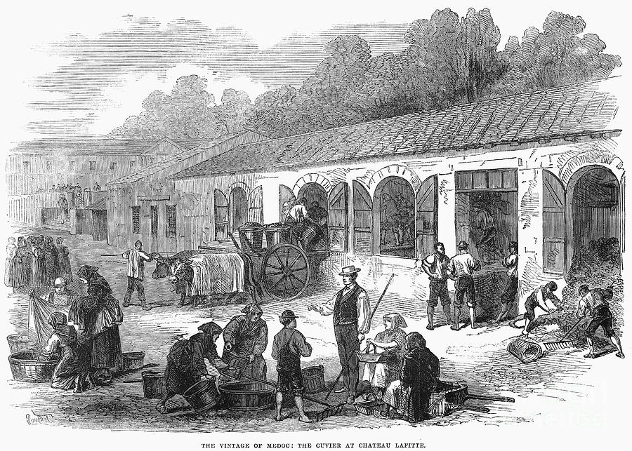 1871 Photograph - France: Winemaking, 1871 by Granger