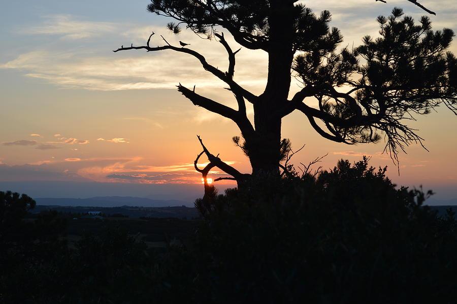 Sunset Photograph - Franktown Colorado Summer by Ann Marie Chaffin