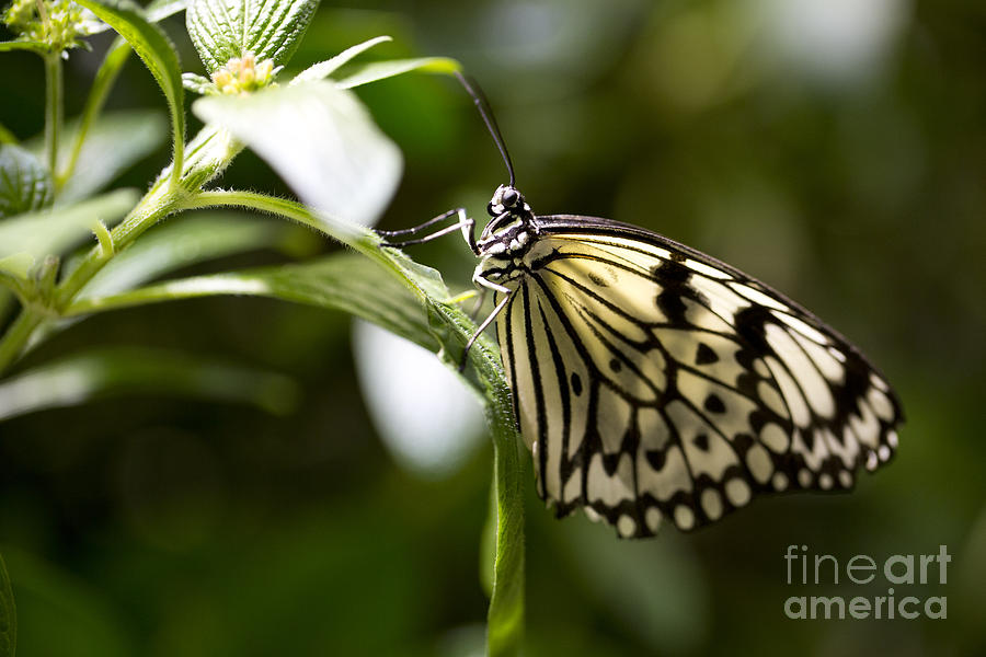 Butterfly Photograph - Fred by Leslie Leda