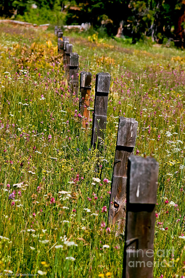 Meadow Photograph - Fredricks Meadow by Mitch Shindelbower