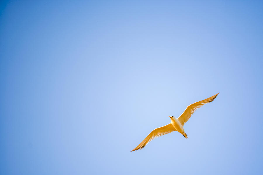 Bird Photograph - Free by Miguel Capelo