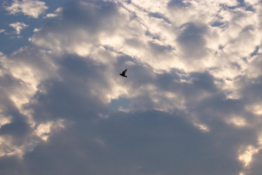 Birds Photograph - Freedom by Brenda Donko