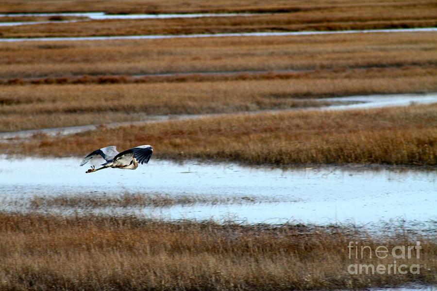 Bird Photograph - Freedom by Eric Chapman