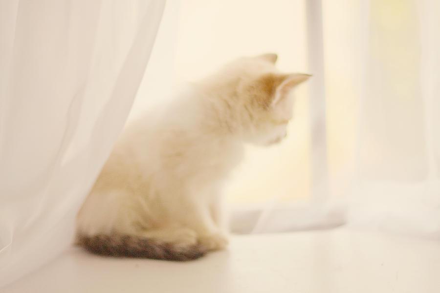 Kitten Photograph - Fresh Wonder by Amy Tyler