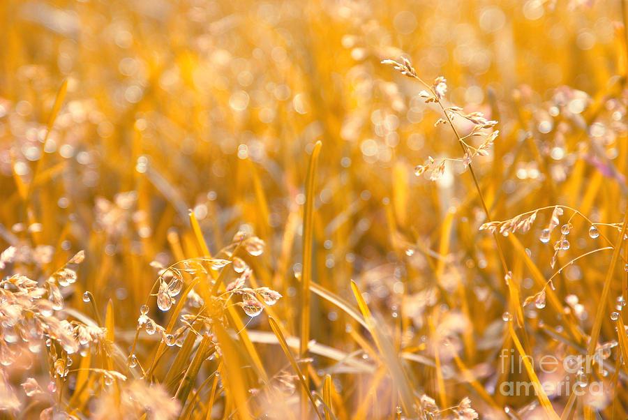 Grass Photograph - Freshness by Aimelle
