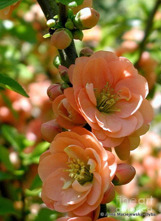 Floral Painting - Freshness Of The Spring by Anna Folkartanna Maciejewska-Dyba