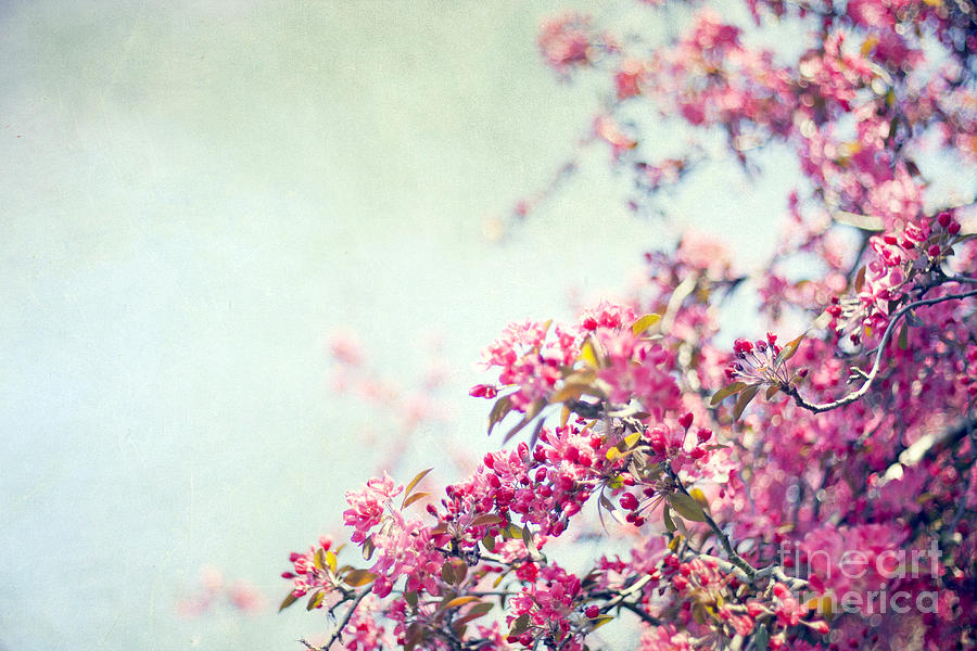 Spring Photograph - Friday Morning by Violet Gray
