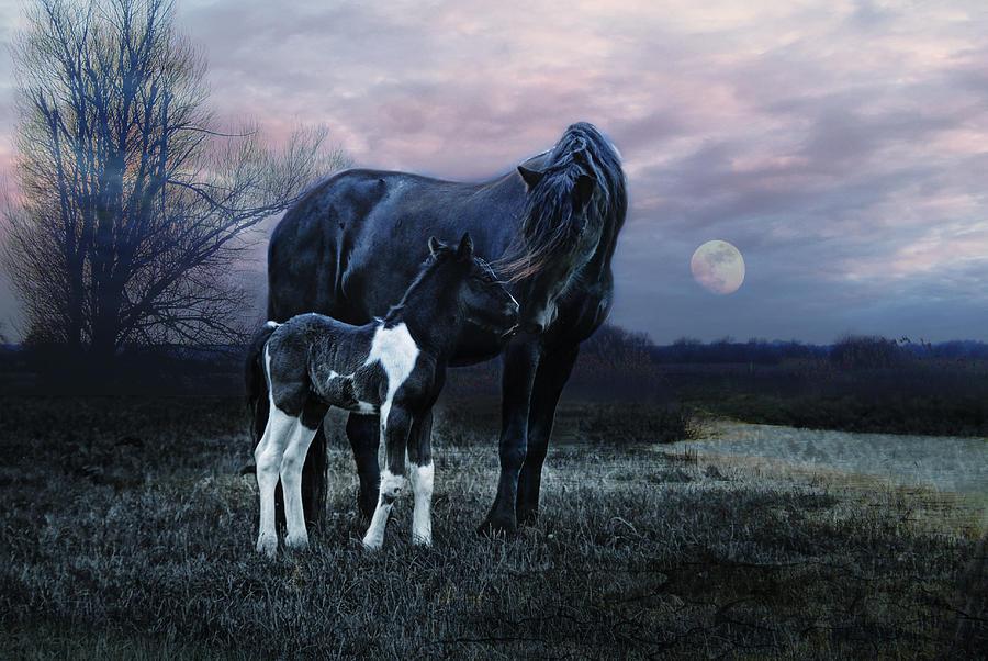 Nature Photograph - Frisian by Joachim G Pinkawa