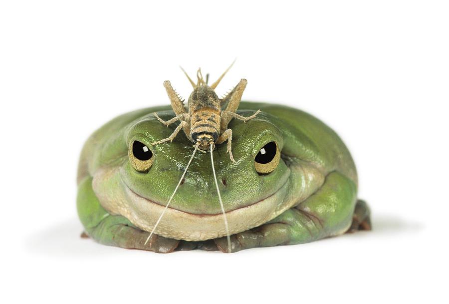 Light Photograph - Frog And Grasshopper by Darwin Wiggett