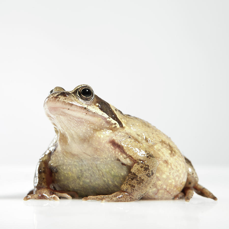 Square Photograph - Frog by Darren Woolridge Photography - www.DarrenWoolridge.com