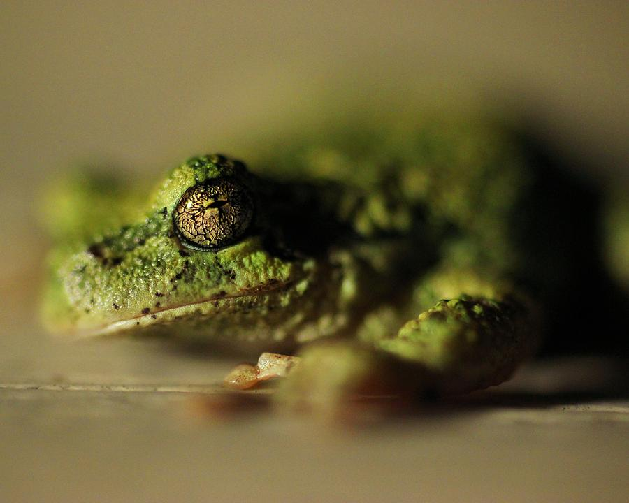 Frog Photograph - Frog Eyes by Leigh Edwards