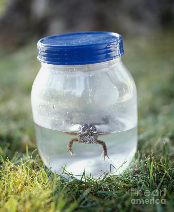 1 Photograph - Frog In A Jar by Adam Crowley