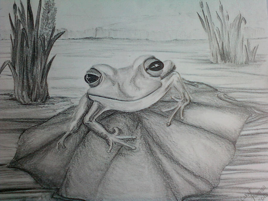 frog drawing frog totem by carol frances arthur