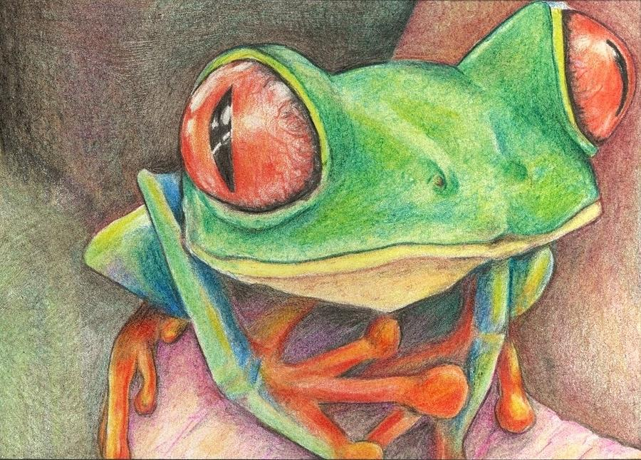 Disegni Rane Colorate: Frog Drawing By Tracy Fitzgerald