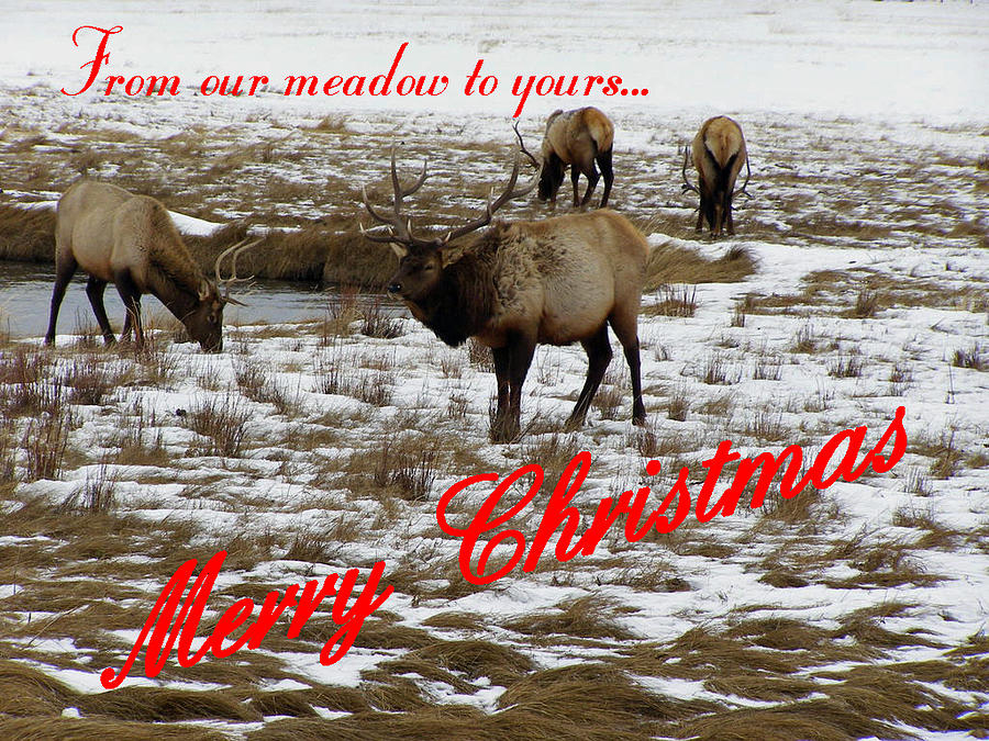 Christmas Cards Photograph - From Our Meadow To Yours by DeeLon Merritt