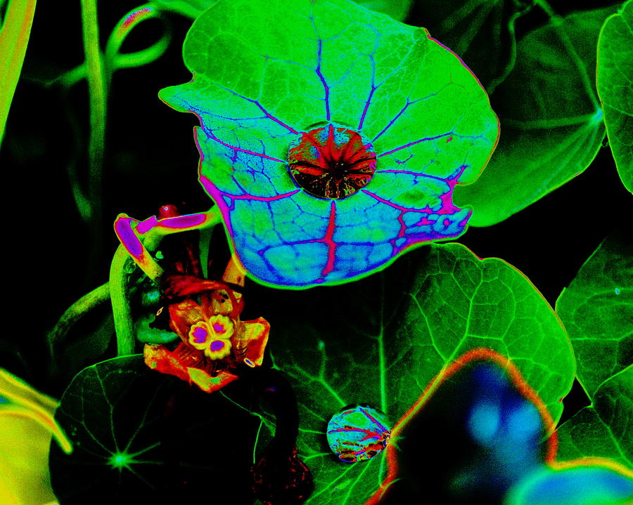 Plants Photograph - From The Psychedelic Garden by Ben Upham III