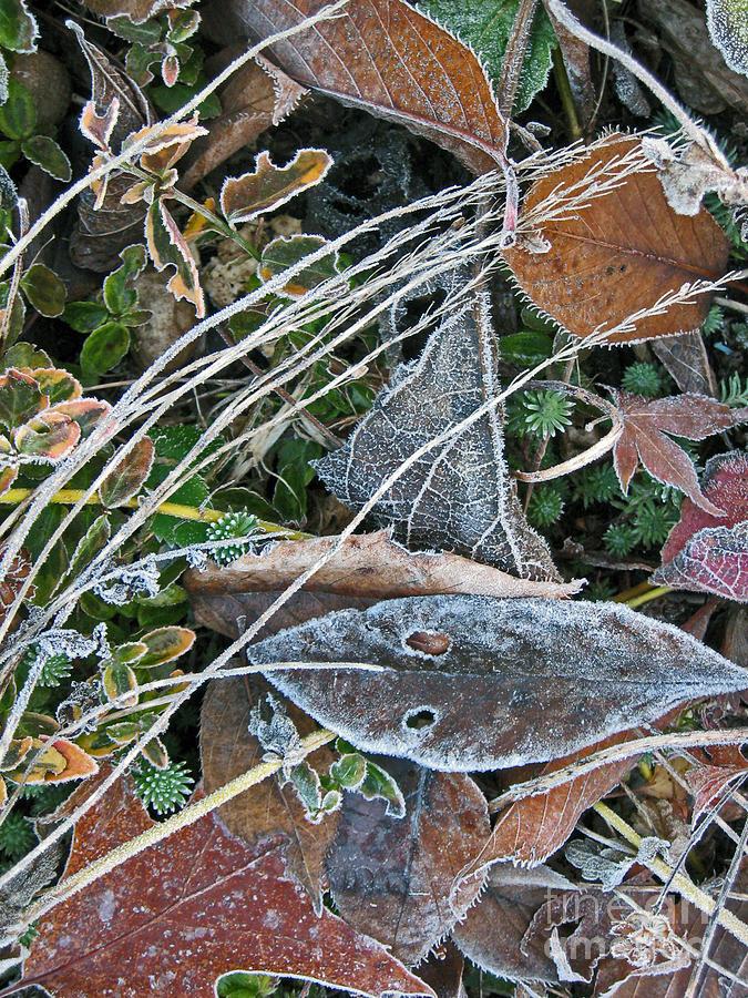 Frost Photograph - Frost Composition by Ellen Miffitt