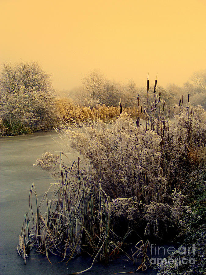 Frost Photograph - Frost by Linsey Williams