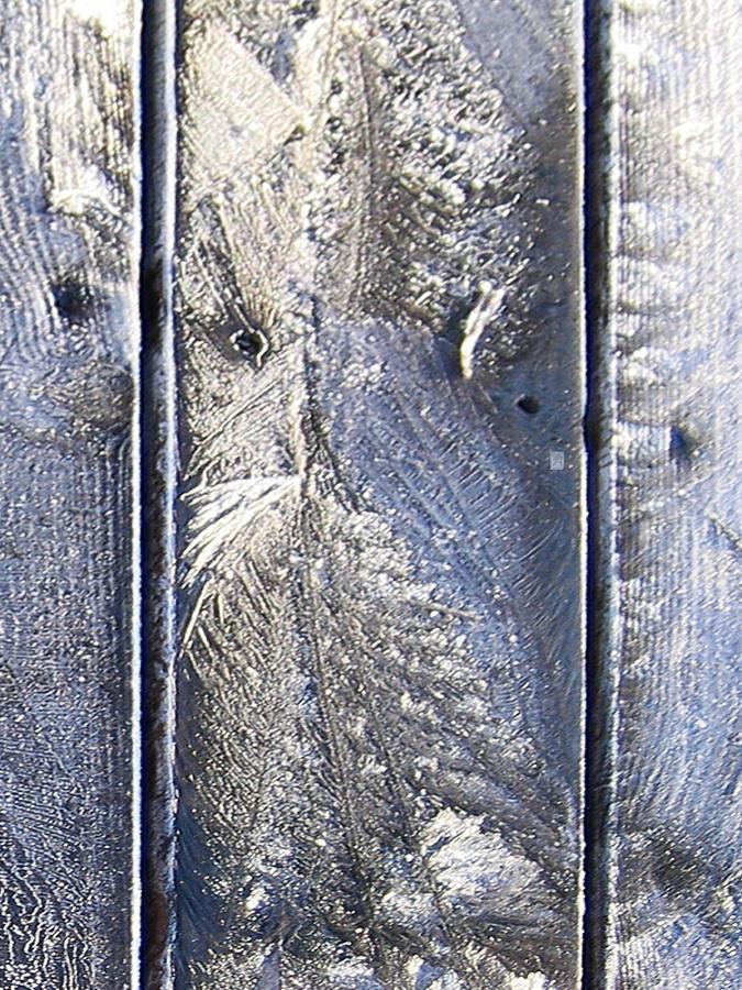 Owl Digital Art - Frost Owl No01 by Greta Thorsdottir