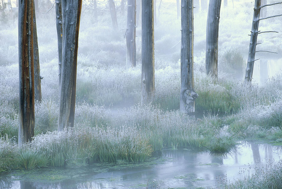 Frosty Morning Yellowstone National Photograph by Tim Fitzharris