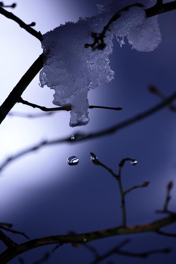 Water Drop Photograph - Frozen But Still Wet by Christine Gauthier