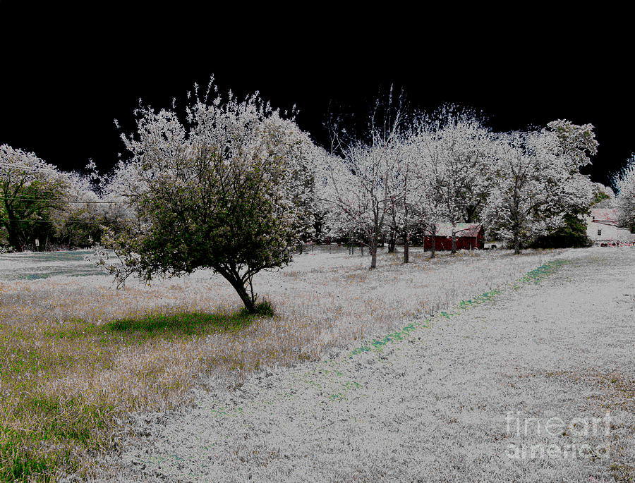 Evening Photograph - Frozen by Cindy Roesinger